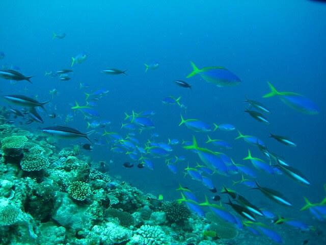 バラス島とその周辺