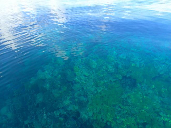 サンゴもいろいろ