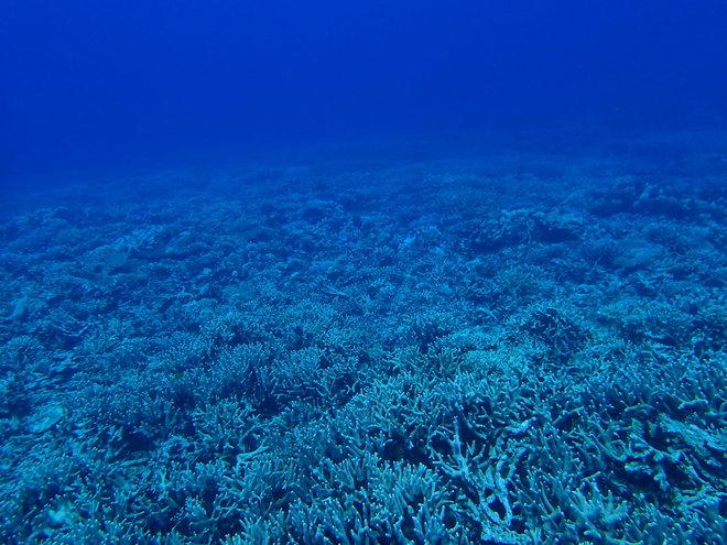 マンツーマンで西表海中生物ウォッチングダイビング