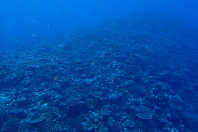 サンゴのキレイなところ