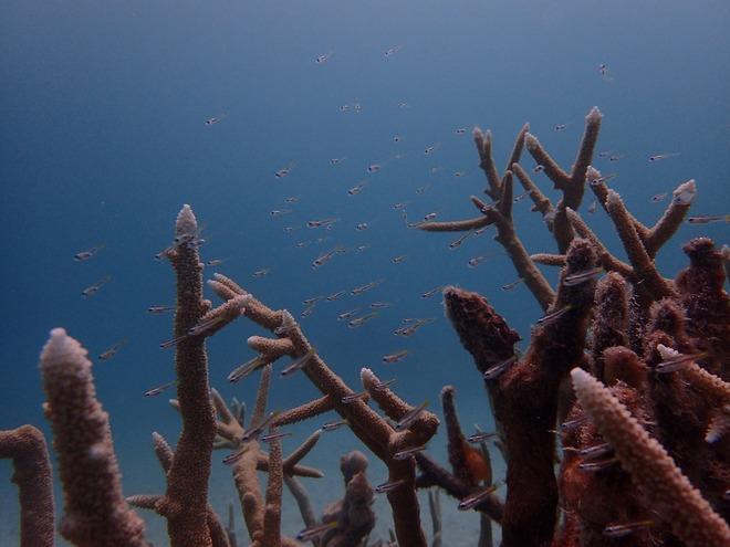 浮遊生活から海底生活へ