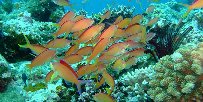 西表島の魚