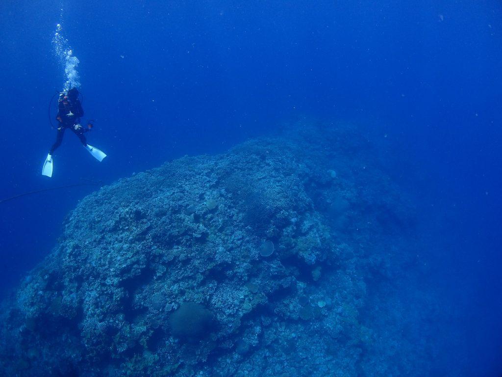少人数対応のダイビング