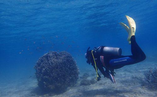 浅海域でのダイビング