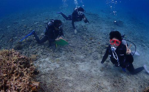 西表 11月体験ダイビング