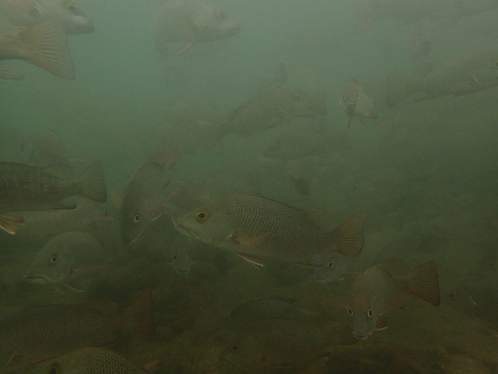 西表汽水域ダイビング