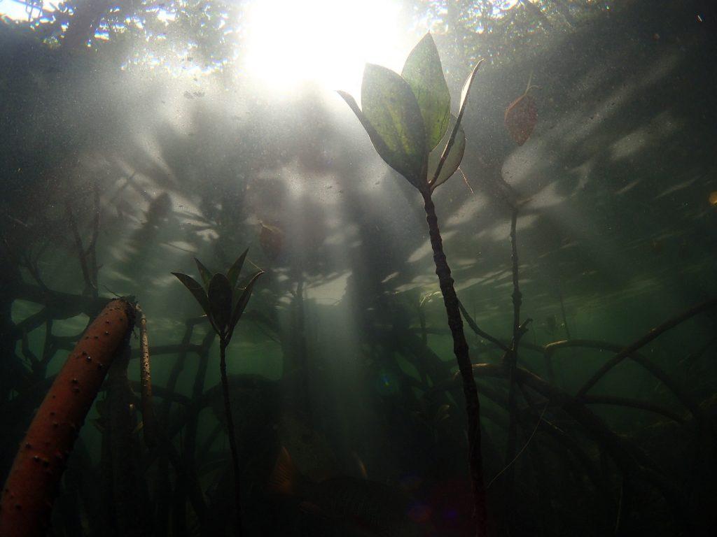 森のような水中