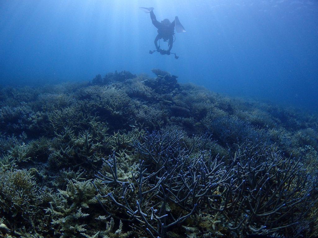 西表 サンゴ樹海