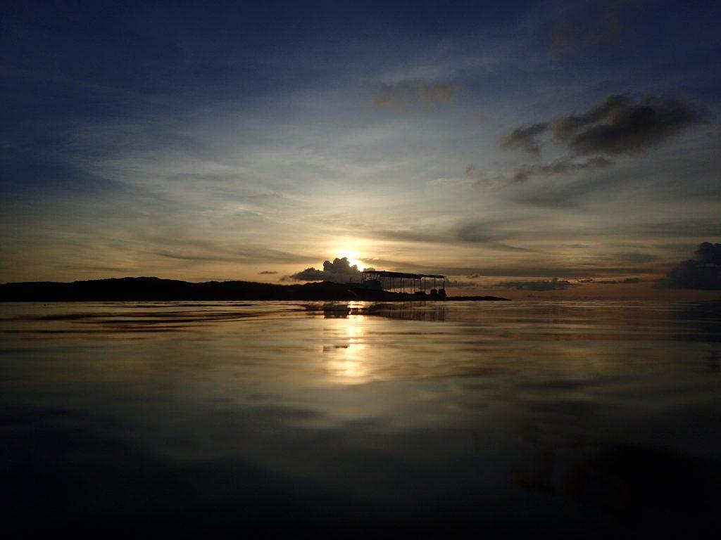 夕刻のニシキテグリのランデブー