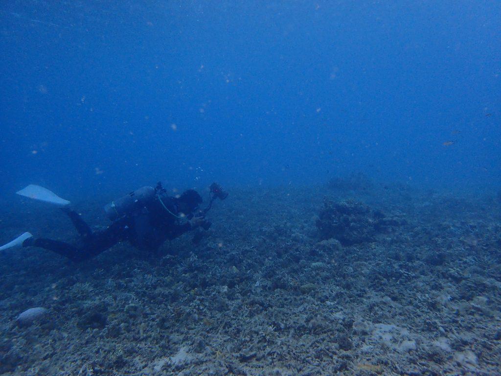 ヒナイでじっくり撮影ダイビング