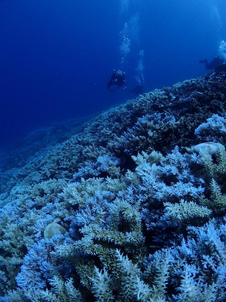 西表 圧倒的なサンゴの海