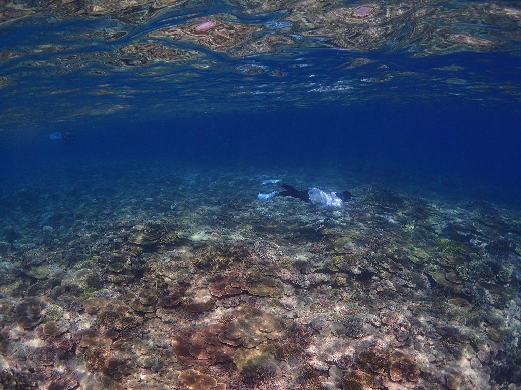 西表の海で素潜り