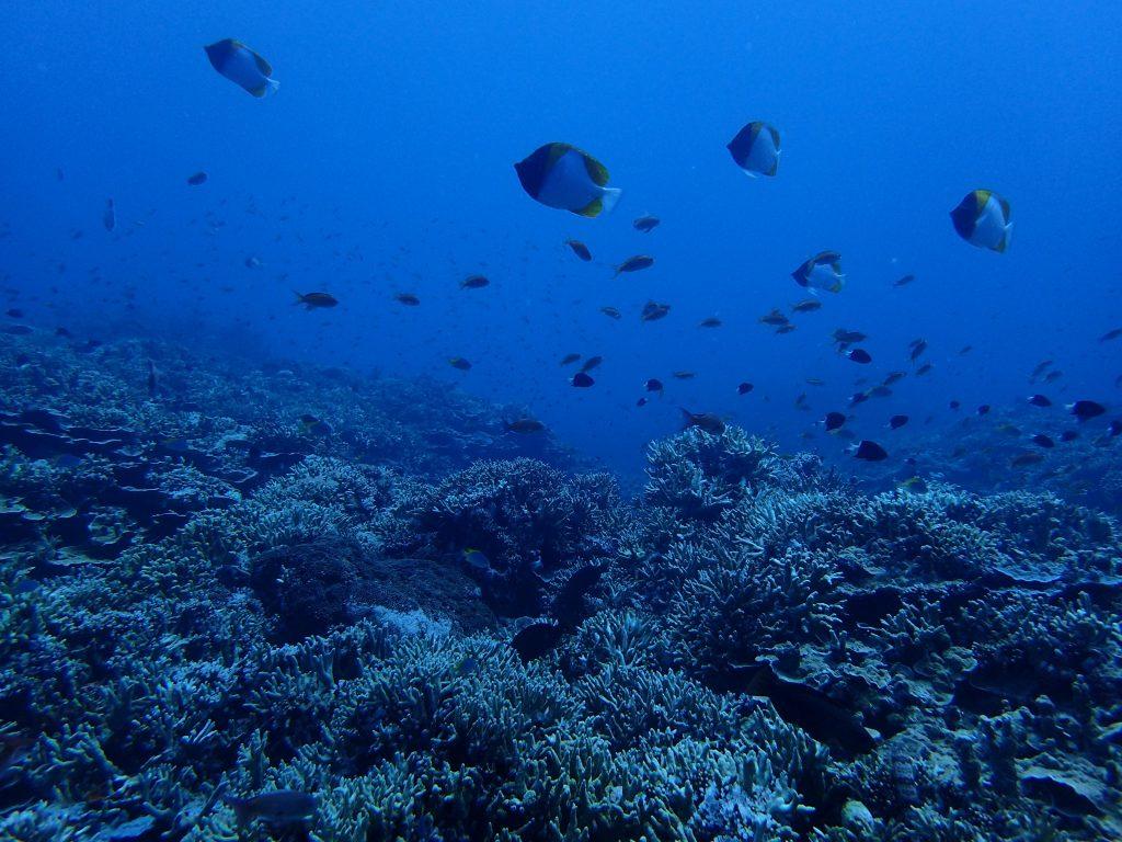 多様で豊かな海 西表島