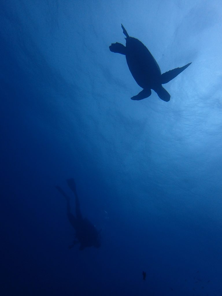 サンゴかカメか