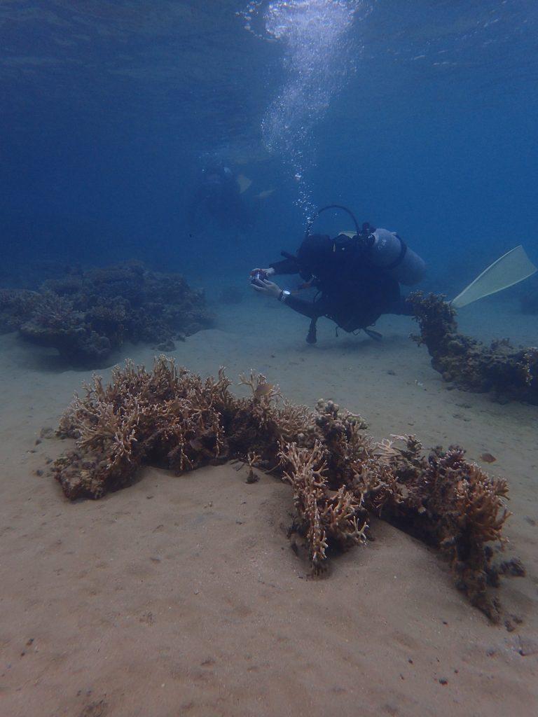 浅い水中、素敵な環境