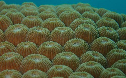 西表サンゴいろいろ
