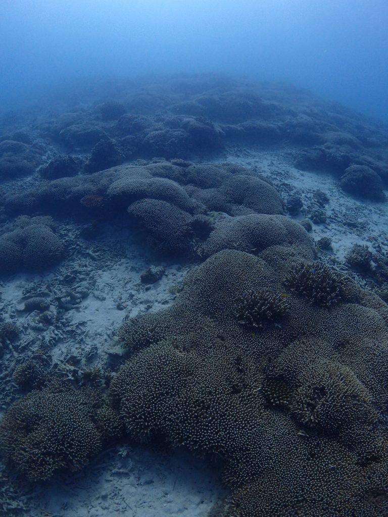 サンゴのある風景2