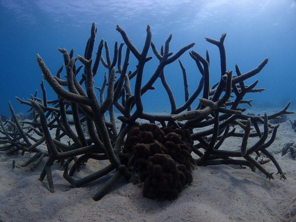 サンゴのある風景