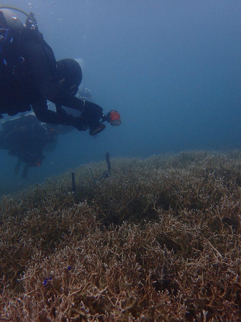 サンゴも地形