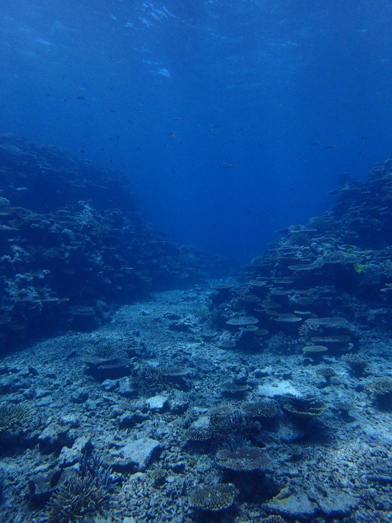 素敵なサンゴの海、西表