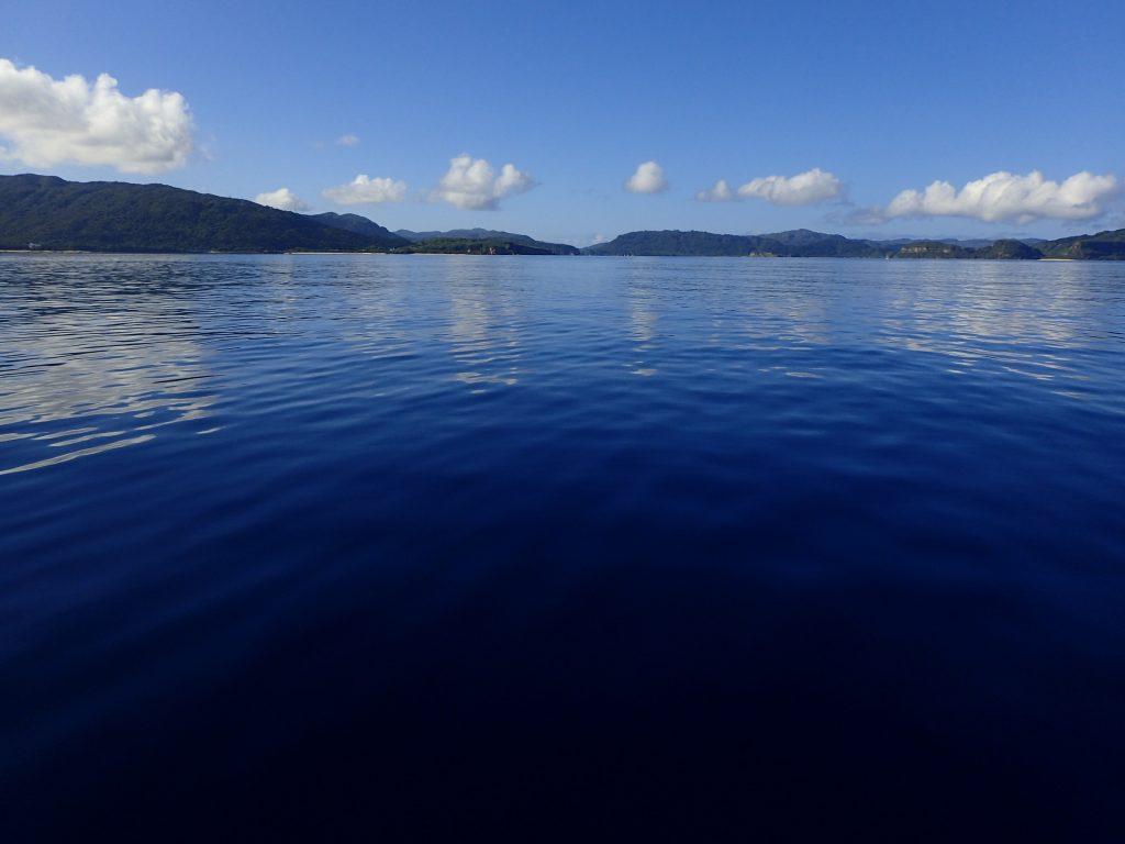 8月の西表島ダイビング